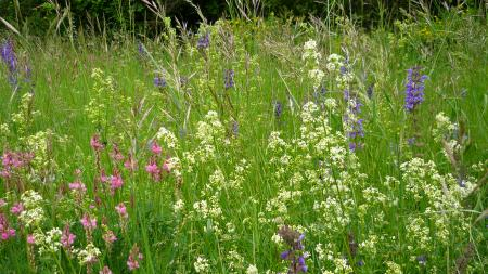 Flore de la Drôme