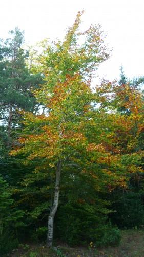 divers automne 2009 202.jpg