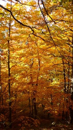 divers automne 2009Q 351.jpg
